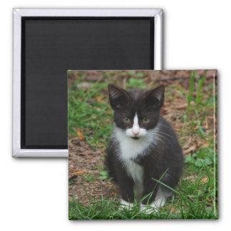 Black And White Kitten Magnet