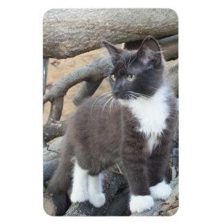 Black and White Kitten Photo Magnet