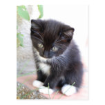Black and White Kitten Postcard
