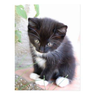 Toddler & Baby themed Black and White Kitten Postcard
