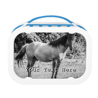 Black and White Konik Horse Lunch Box