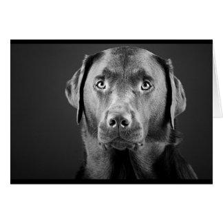 Black and White Labrador Greeting Card