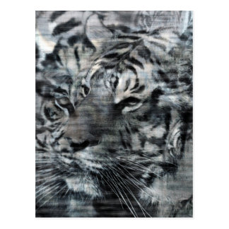 Black and White Layered Tigers Vintage Postcard