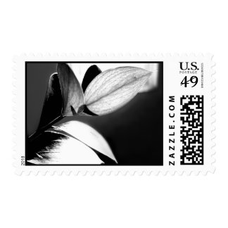 Black and White Leaves-Right Postage Stamps