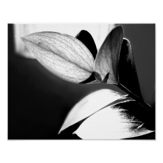 Black and White Leaves-Right print