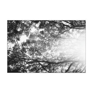 Black and White Leaves Tree Branches in Sun Glow Canvas Print