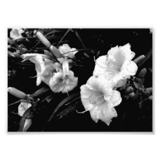 Black and White Lillies Print
