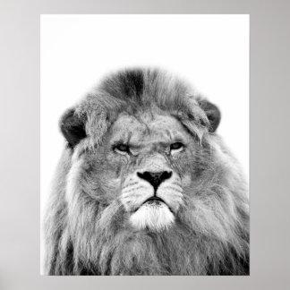 Black and white lion animal wild jungle photo poster