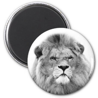 Black and white lion jungle zoo animal photo magnet