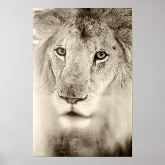 Black and White Lion Portrait Poster