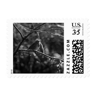 black and white little bird stamp