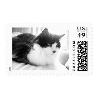 Black and White Long-haired Kitty Cat Postage