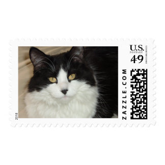 Black and White Longhaired Cat Postage