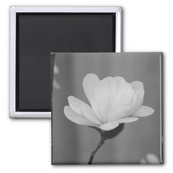 Black and White Magnolia Centennial Bloom 2 Inch Square Magnet