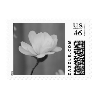 Black and White Magnolia Centennial Bloom Stamps