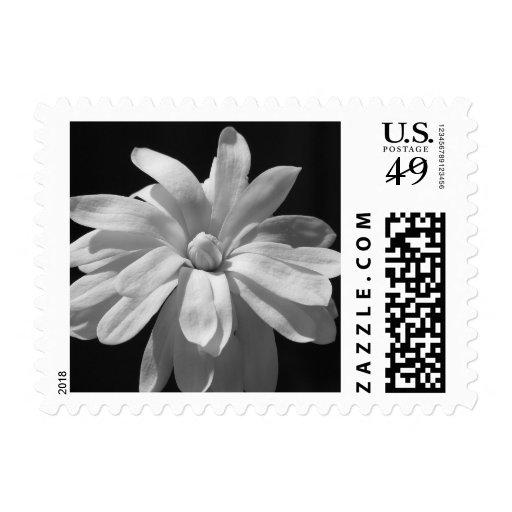 Black and White Magnolia Centennial Stamp