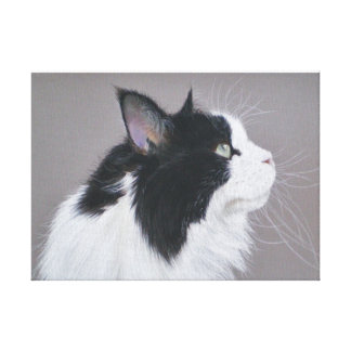 Black and White Maine Coon cat Canvas Print