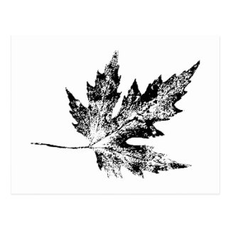 """""""Black and White Maple"""" Country Roads Postcard"""