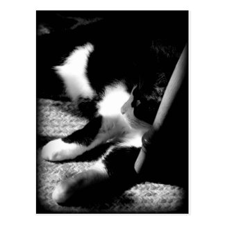 Black and White Max Postcard