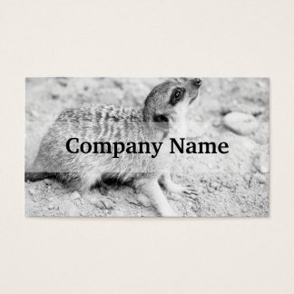 Black and White Meerkat, Animal Photography Business Card