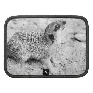 Black and White Meerkat Animal Photography Folio Planner