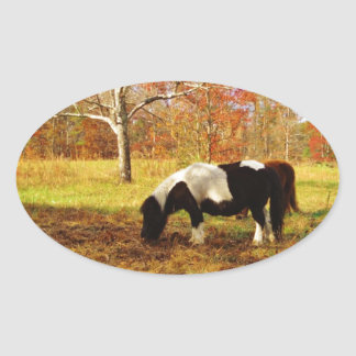 Black and White Miniature Pony / Horse Oval Sticker