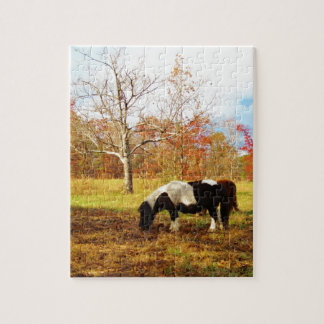 Black and White Miniature Pony Horse Jigsaw Puzzle