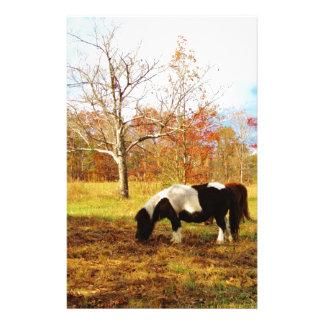 Black and White Miniature Pony / Horse Stationery