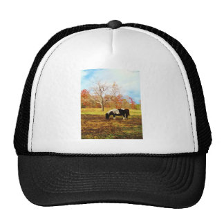Black and White Miniature Pony / Horse Trucker Hat