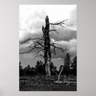 Black and white Nature Scene Poster