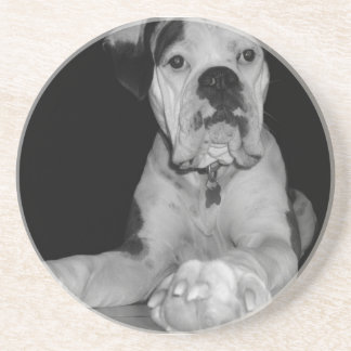 Black and White Noble Boxer Drink Coaster