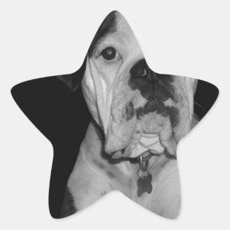 Black and White Noble Boxer Star Sticker
