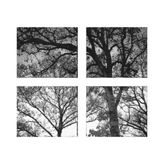 Black and White Oak Trees Canvas Print