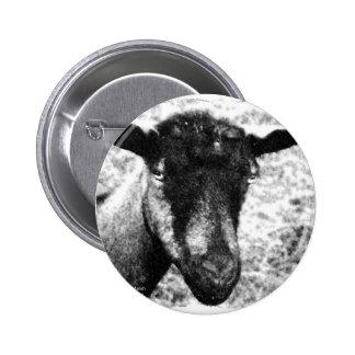 Black and white Oberhasli doe goat head view Pins