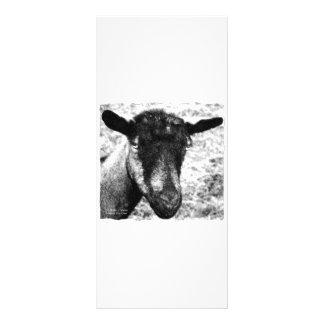 Black and white Oberhasli doe goat head view Rack Card