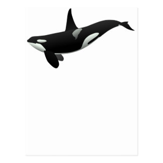 Black and White Orca Killer Whale Postcards