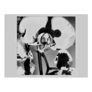 Black and White Orchid Photograph Paper Products Postcard
