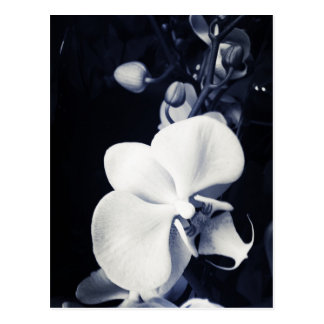 Black and white orchid postcard