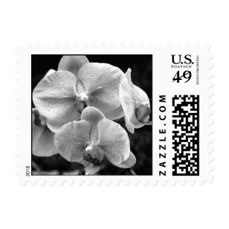 Black and White Orchid Stamp Small