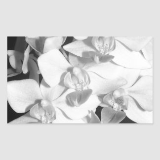 Black and White Orchids Rectangular Sticker