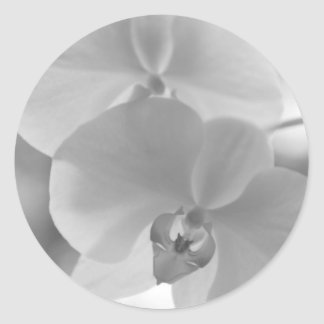 Black and White Orchids Classic Round Sticker