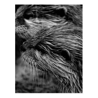 black and white otters postcard
