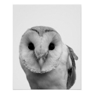 Black and white owl photography poster