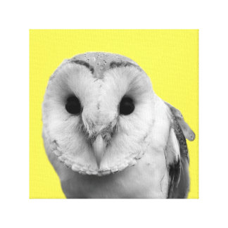 Black and white owl wild animal peekaboo photo canvas print