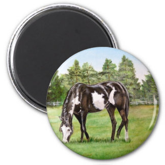 Black and White Paint horse/pony grazing in field 2 Inch Round Magnet