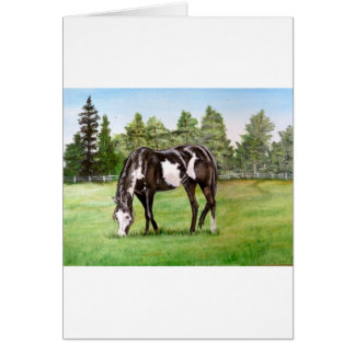 Black and White Paint horse/pony grazing in field Greeting Cards
