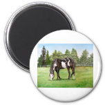 Black and White Paint horse/pony grazing in field Refrigerator Magnet