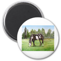 Black and White Paint horse/pony grazing in field Magnet
