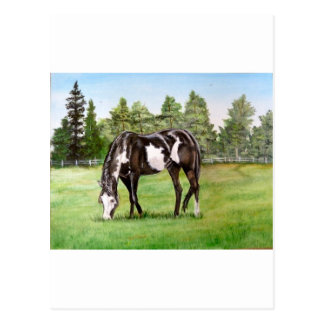 Black and White Paint horse/pony grazing in field Postcard