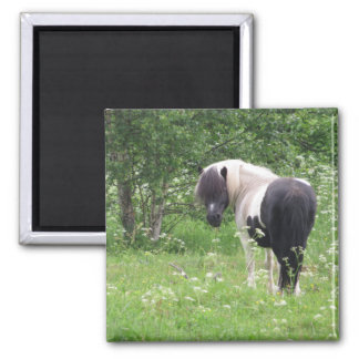 Black and White Paint Pony in Grass and Flowers Refrigerator Magnet
